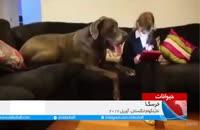 ویدئو جال سگ بزرگ