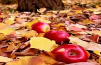 آهنگ شاد و پرانرژی مهر۲ از راتین رها در آلبوم هنرمند