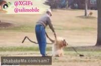 قهر کردن سگ