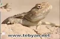 ویدئو زیبا از حیات وحش بوشهر