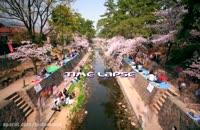 شکوفه های زیبا در کشور ژاپن