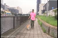 سگی که واق واقش ترجمه می شود