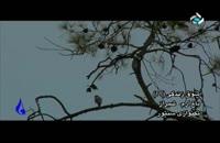 باغ ارم شیرازدرسری برنامه های شوق زندگی