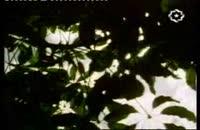 زندگی گیاهان1