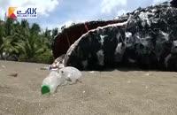 ساخت مجسمه نهنگ مرده با استفاده از زباله های پلاستیکی