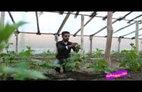 فوت کوزه گری 7 - بسیج سازندگی - محصولات گلخانه ای