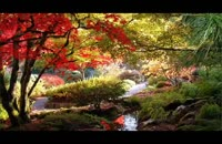 جنگلی سبزم اصغر عظیمی مهر دکلمه مصطفی خلاق