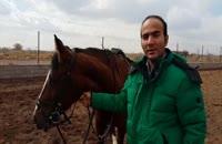 سال اسب، دوست داشتنی ترین رام شده تاریخ