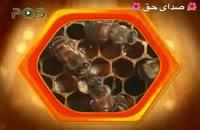 ویدیو فوق العاده و بسیار جذاب زنبور عسل