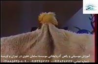 آموزش موسیقی و رقص آذربایجانی موسسه سامان علوی در تهران و اورمیه 81