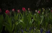 سه سال طول کشید تا این فیلم از شکفتن گلها ثبت شود