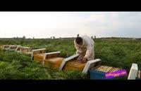 فوت کوزه گری 5 - بسیج سازندگی - پرورش زنبور عسل