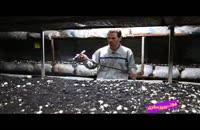 فوت کوزه گری 2 - بسیج سازندگی - پرورش قارچ