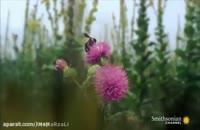 اسلوموشن از زنبور عسل