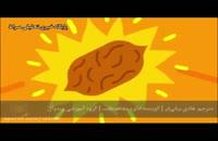 چگونگی عملکرد ویتامین ها در بدن