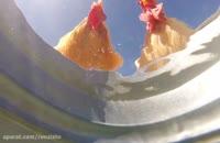 دوربین مخفی از آب خوردن حیوانات مختلف