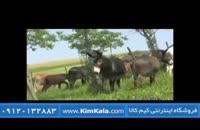 شیر الاغ و خواص درمانی آن