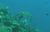 فیلم مستند Ocean Wonderland 2003