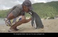 این پنگوئن هر سال 5000 مایل سفر میکند