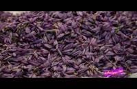 فوت کوزه گری 14 - بسیج سازندگی - کشت زعفران