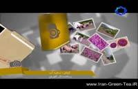 تصاویری از برداشت گل گاوزبان در اشکورات رودسر،گیلان